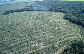 Brasil caminha para recorde de desmatamento na Amazônia | CicloVivo